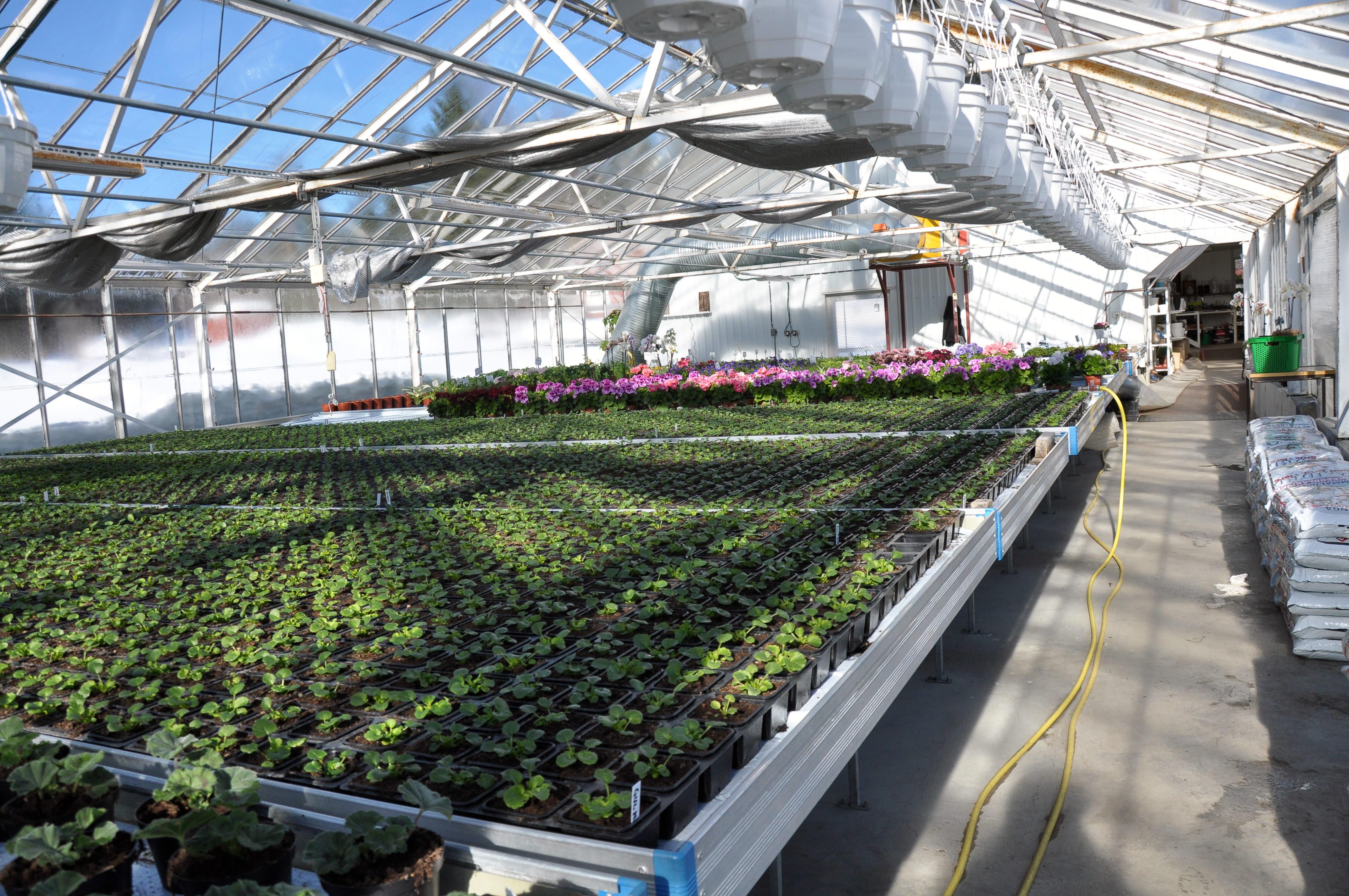 Säve plantskola blir ännu grönare