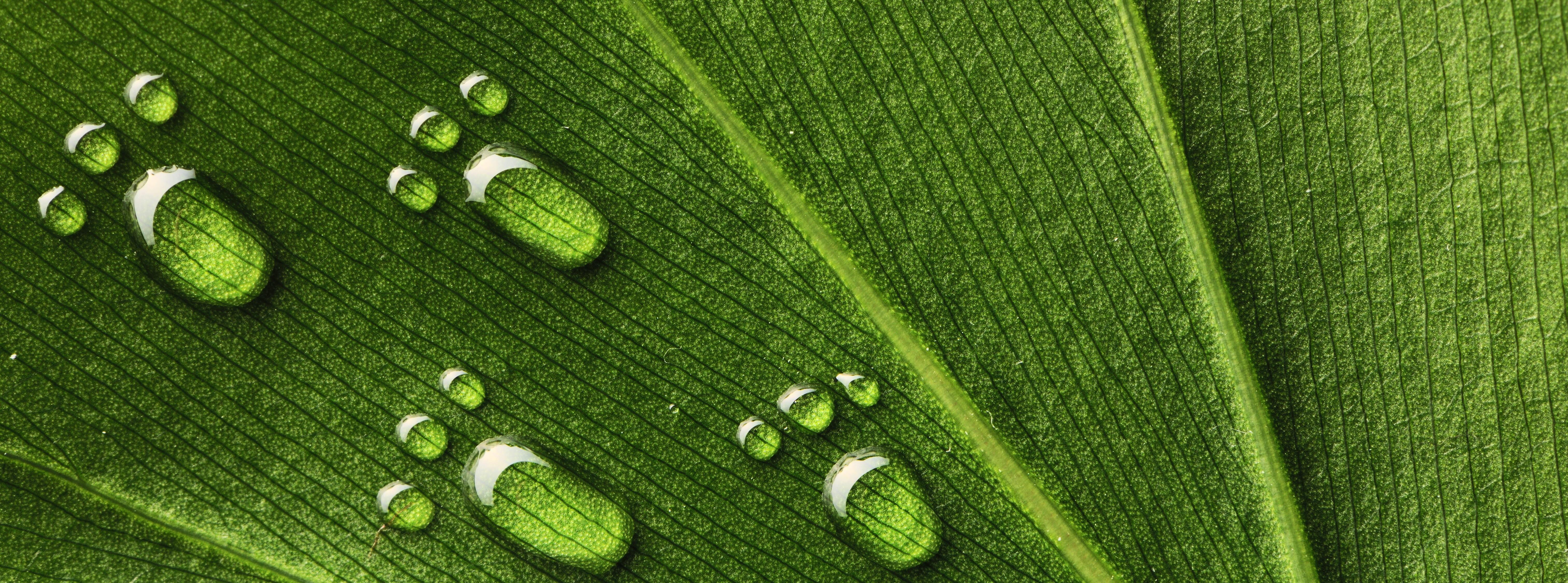 Samarbeten under Kyotoprotokollet
