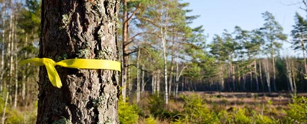 Informationsmöte om Energimyndighetens nya satsning på  biobaserade lösningar för energi- och klimatomställningen