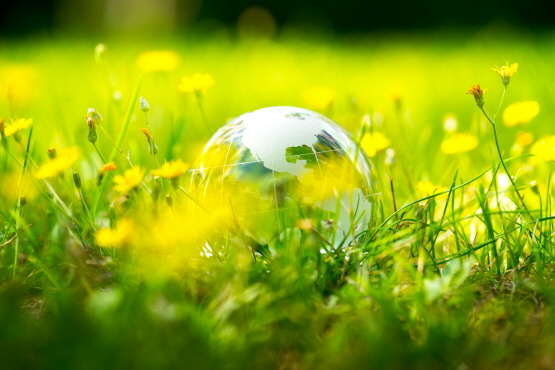 Picture transparent globe in grass